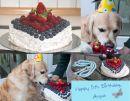 001-Collage-Angus-Geburtstag