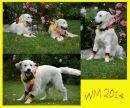 collage-WM-web